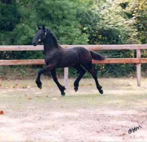 Wyn - 1999 Champ Colt Trot