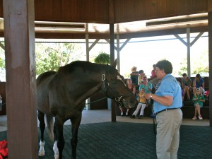 """World's Highest Money Winning Racehorse - """"Cigar"""" at 26 years of age"""